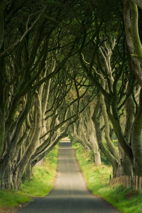 Буковая аллея в графстве Антрим Северной Ирландии.