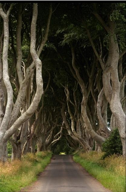 Таинственный лес или темная аллея в