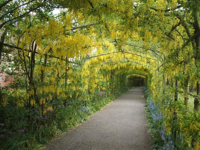 Тоннель желтых цветов в японском парке Кавати Фудзи. Фото