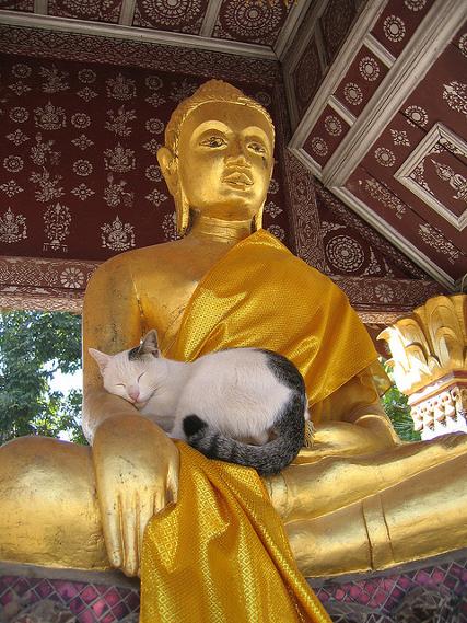 Кот и Будда. Необычное фото