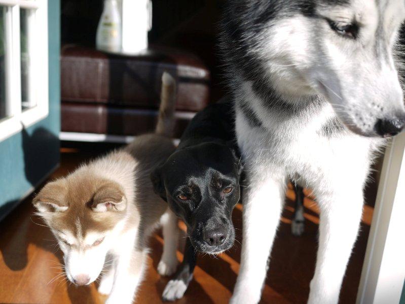 Говорящая собака Мишка и ее домашние собратья. Фото