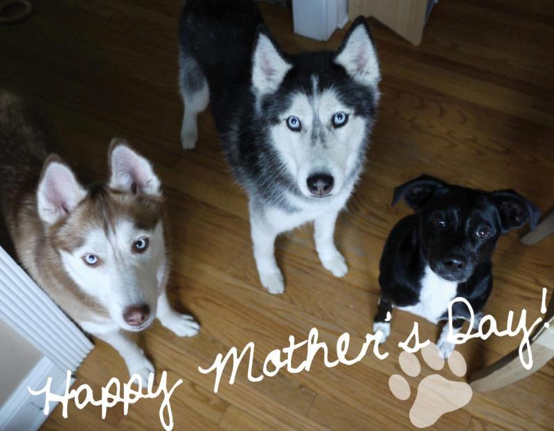 Говорящая собака Мишка, Лайка и Моки. Фото