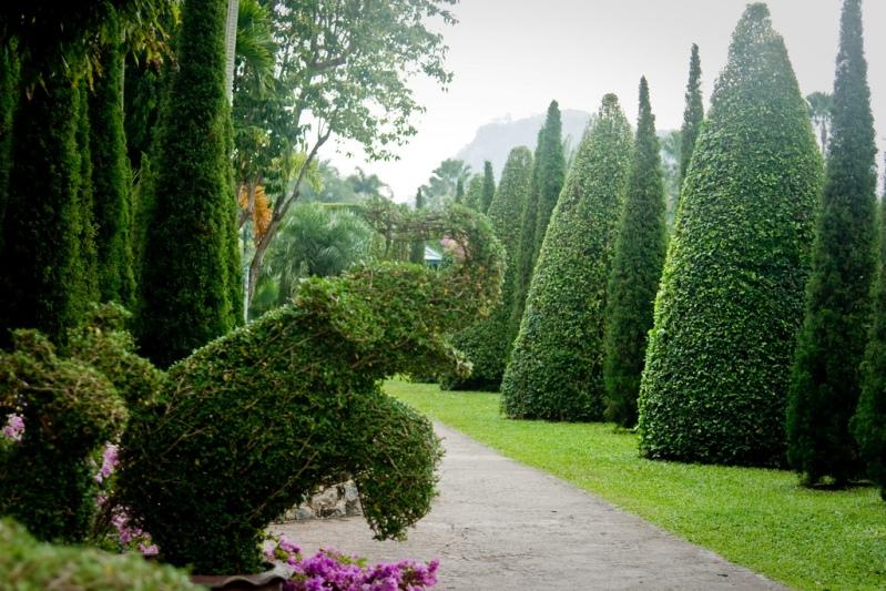 Фигурно подстриженные деревья и кусты. Парк Нонг Нуч в Таиланде. Фото