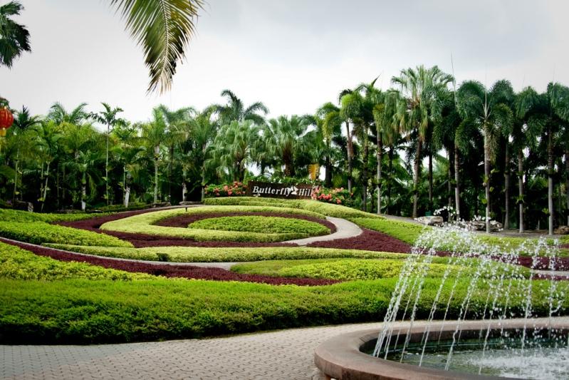 Сад бабочек в парке Нонг Нуч в Таиланде. Паттайя. Фото