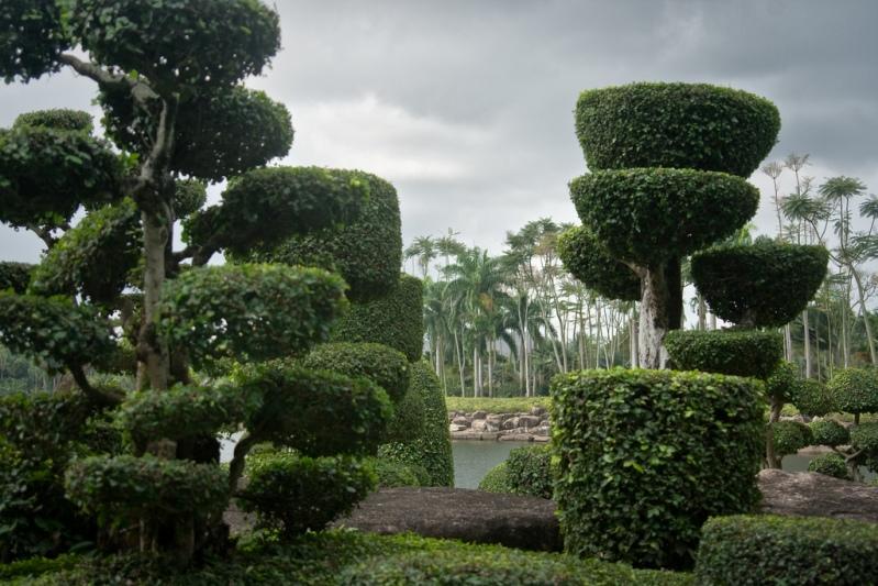 Бонсай в Парке Нонг Нуч в Таиланде. Фото