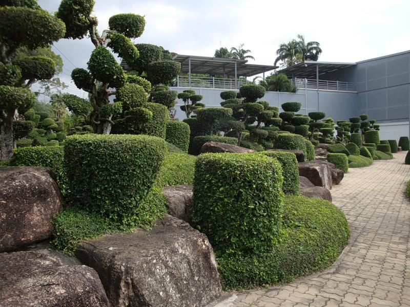 Коллекция бонсай в Парке Нонг Нуч в Таиланде. Фото