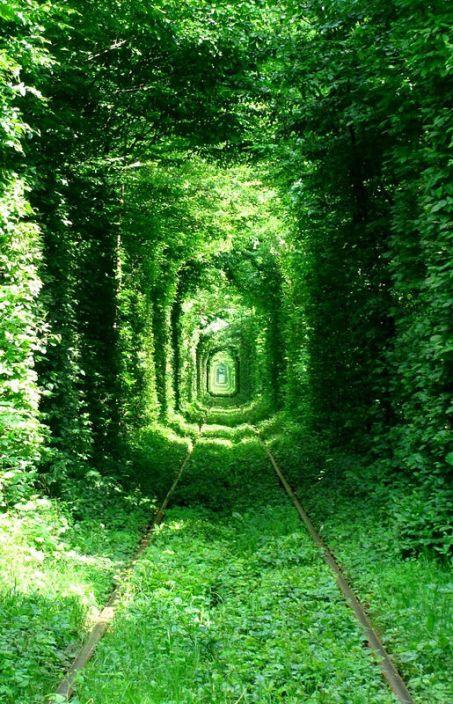 Тоннель любви летом в городе Клевань, Украина. Фото