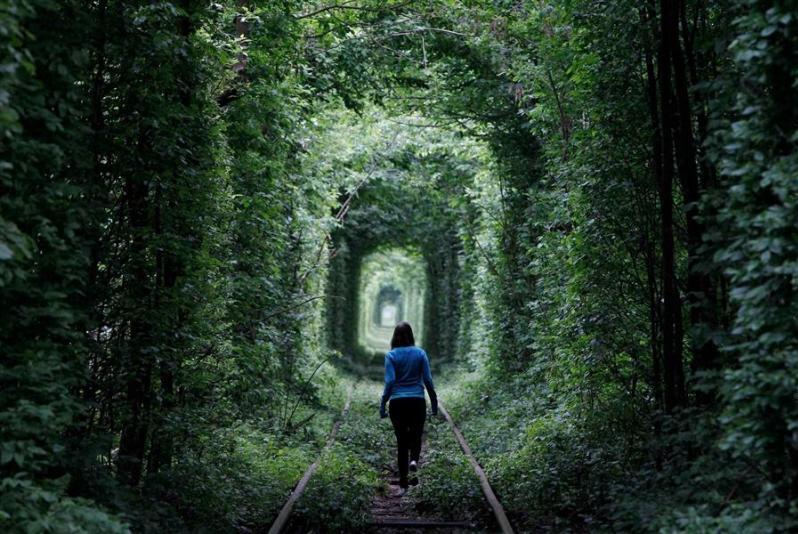 Тоннель любви в городе Клевань, Украина. Летнее фото