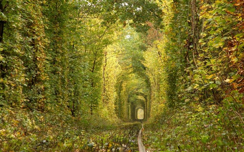 Тоннель любви в городе Клевань, Украина. Фото осенью