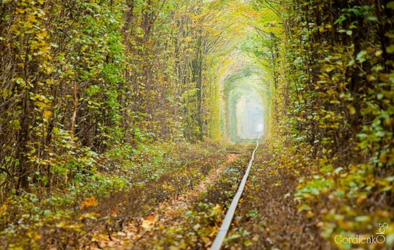 Тоннель любви осенью в городе Клевань, Украина. Фото