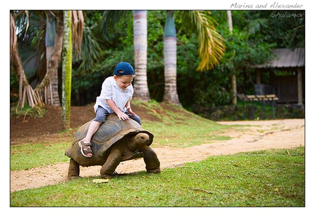 мальчик верхом на гигантской черепахе острова Маврикий. Фото