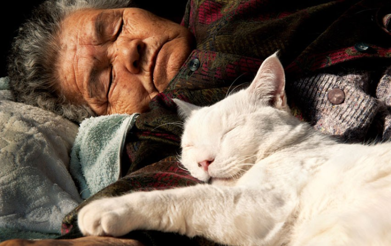 Трогательная дружба бабушки и кошки. Япония. Фото