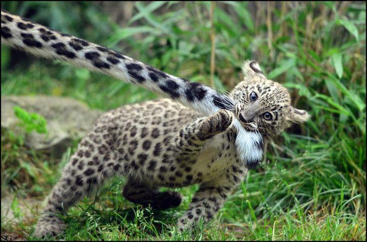 Лучшая игрушка в мире леопардовый