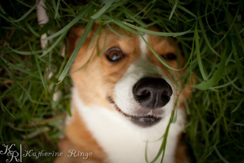 Собака загадочно улыбается. Фото