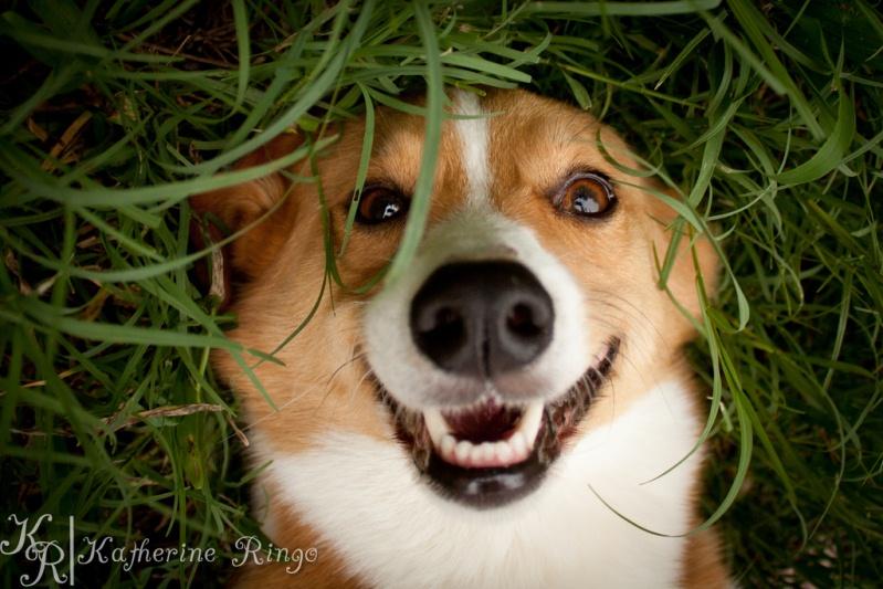 Собака улыбается. Фото