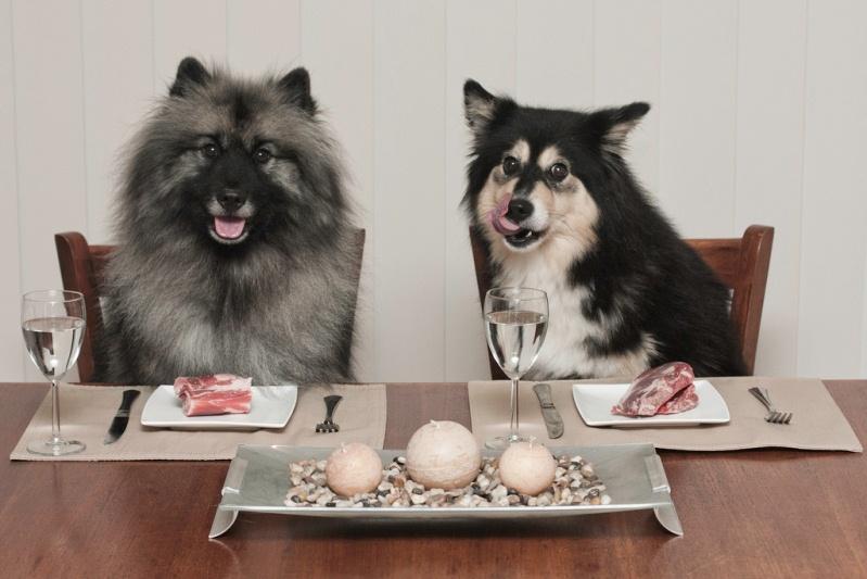 Собаки кушают как люди за столом. Фото