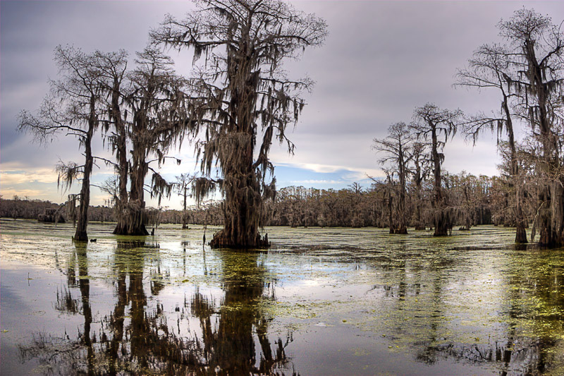 Красивые кипарисы зимой. Озеро Каддо в Техасе. Фото