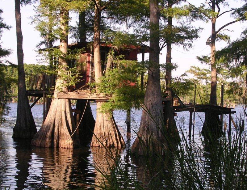 Красивые кипарисы. Озеро Каддо в Техасе. Фото