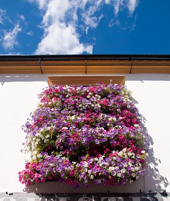 Прекрасный фестиваль цветов в испанских патио. Город Кордова.