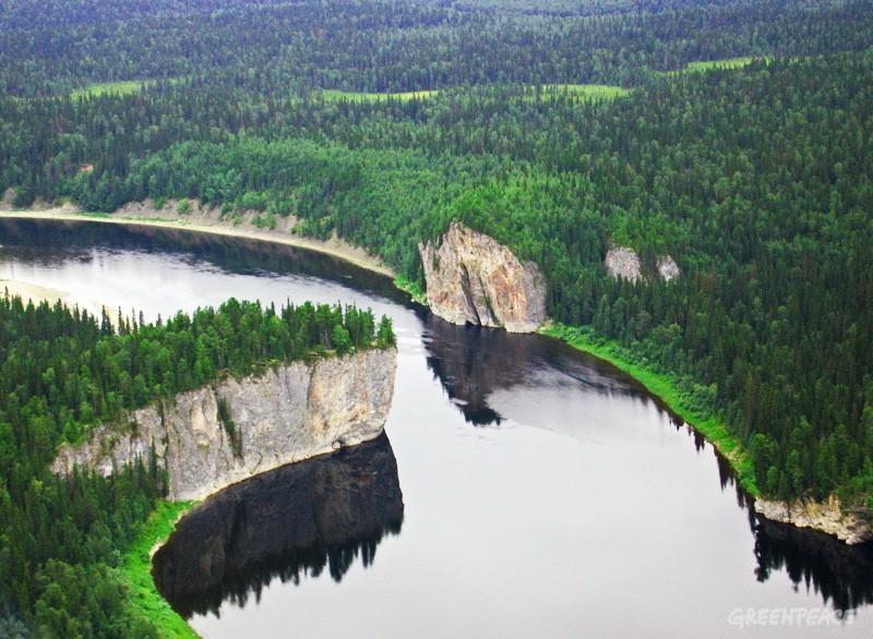 Девственные леса в заповедниках Республики Коми. Фото