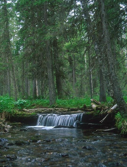Горный ручей. Печоро-Илычский заповедник, г. Маньпупунёр. Фото