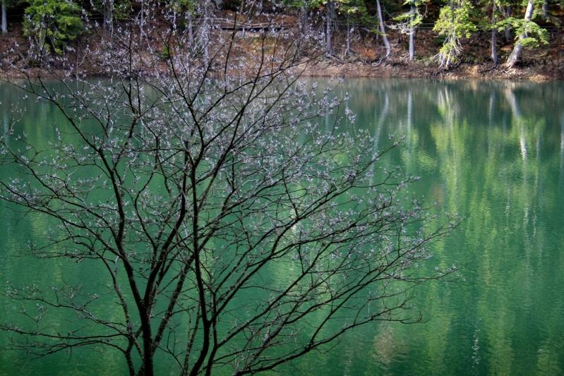 Синевир - самое красивое и большое озеро Украинских Карпат. Фото