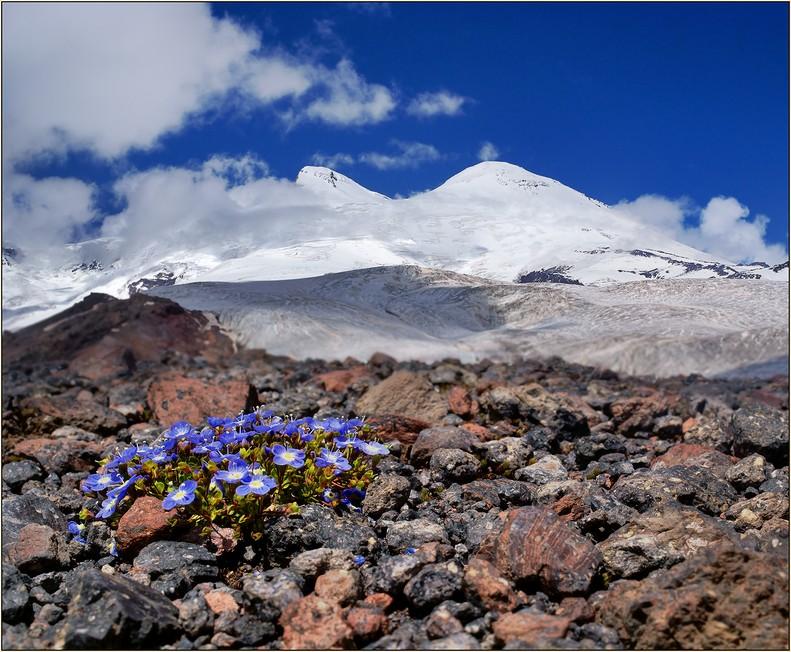 Кавсказские горы: вулкан Эльбрус. Цветы. Красивое фото