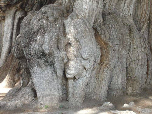 слон на дереве Туле