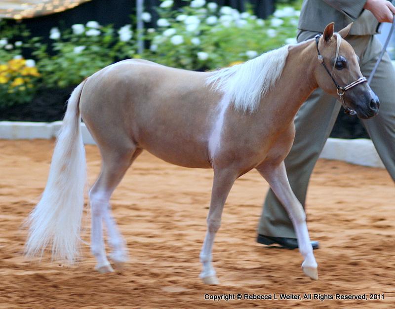 Картинки по запросу миниатюрная лошадь