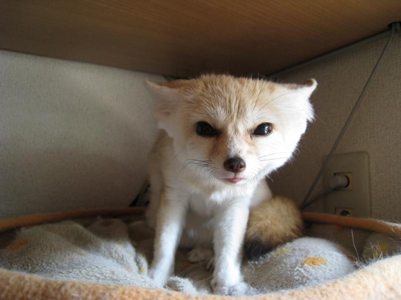 Домашние животные - Фото домашних животных - Виды