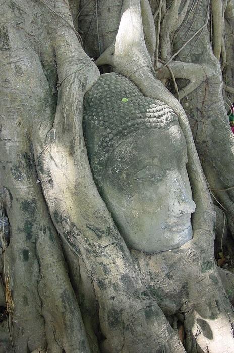 Голова Будды в дереве. Аюттхайя. Фото
