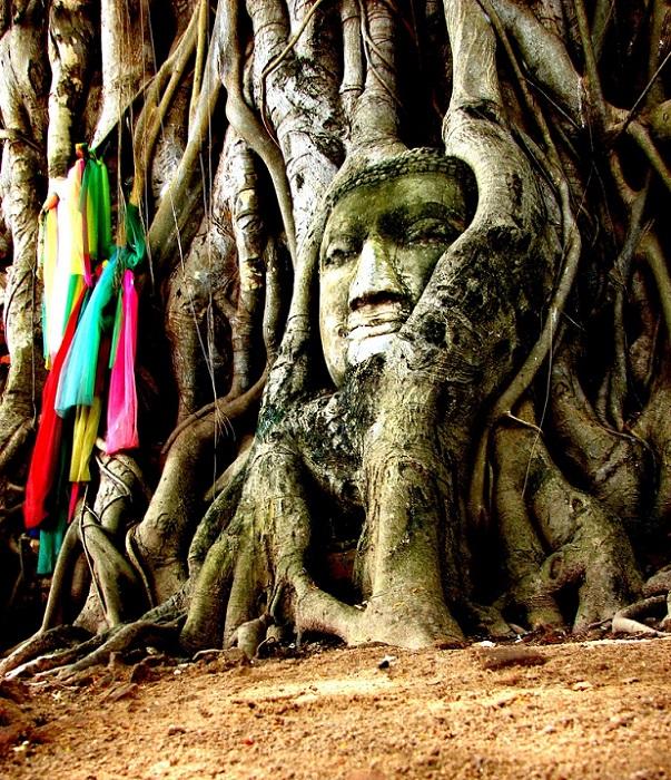Голова Будды среди корней дерева. Фото