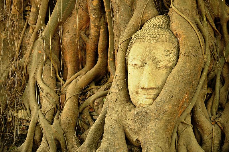Часть скульптуры, обвитая деревом у храма в Таиланде
