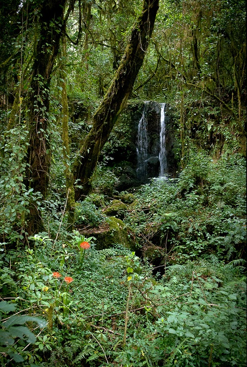 Экваториальной лес близ Килиманджаро. Фото