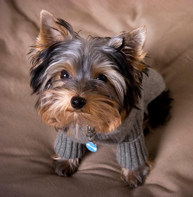 комнатные собаки породы фото