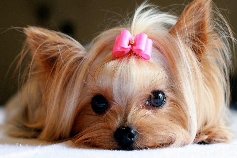 собак с длинной шерстью