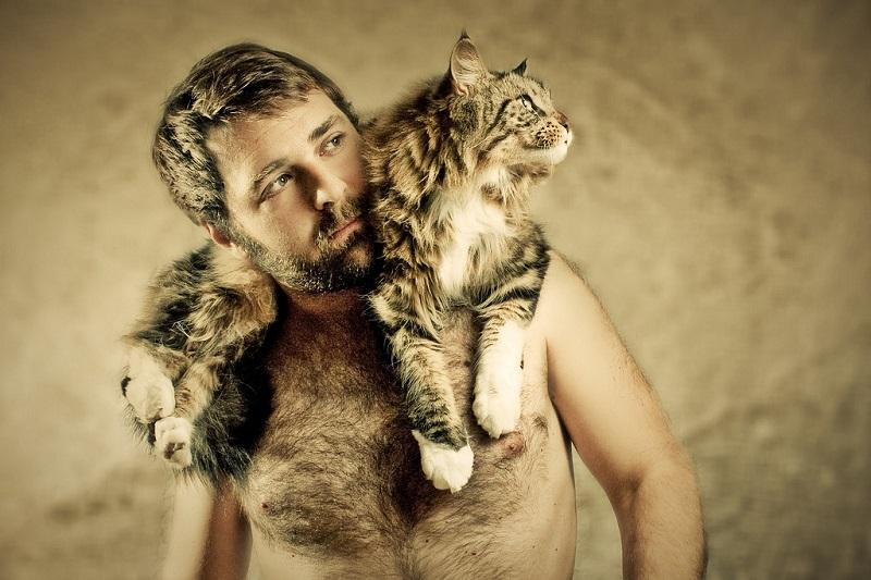 Кошка мэйнкун на плечах хозяина. Фото