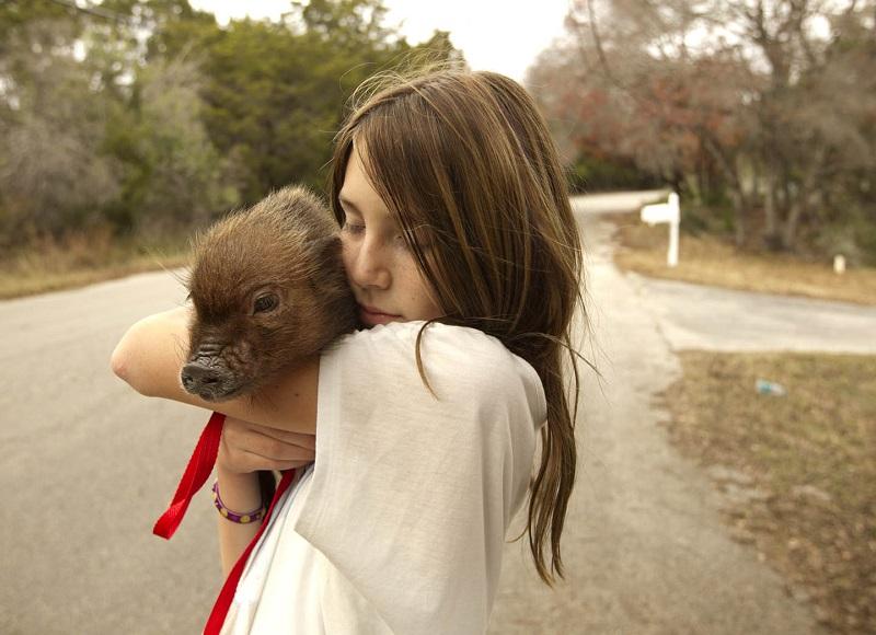 Девушка обнимает мини-пига. Фото