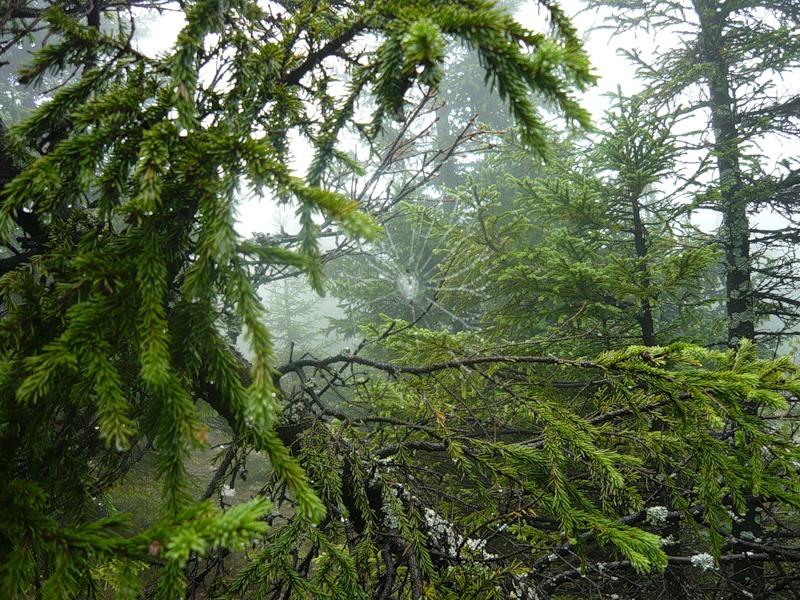 Долина сказок. Национальный парк Таганай. Урал. Фото