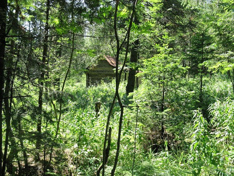 Избушка в лесу. Национальный парк Таганай. Урал. Фото
