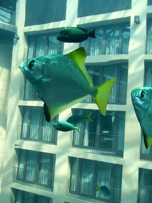 Отель Radisson Blu в Берлине. Гигантский аквариум. Фото