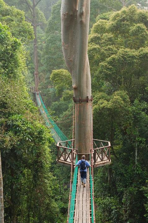 Подвесная канатная дорога по тропическому лесу Борнео. Фото