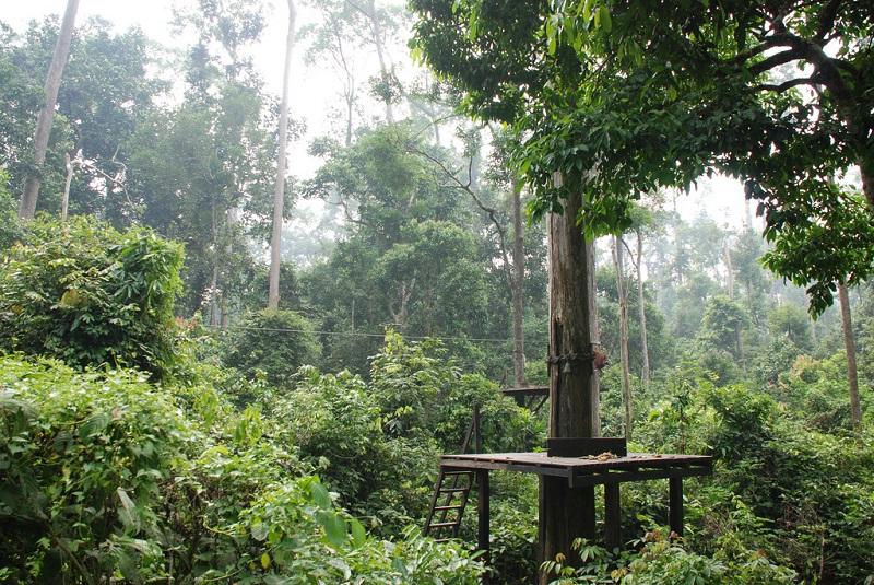 Реабилитационный центр для орангутангов на острове Борнео.Фото
