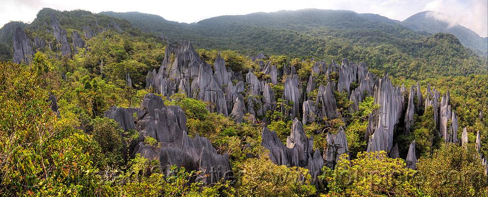Необычные островехие скалы в парке Гунунг Мулу. Борнео. Фото