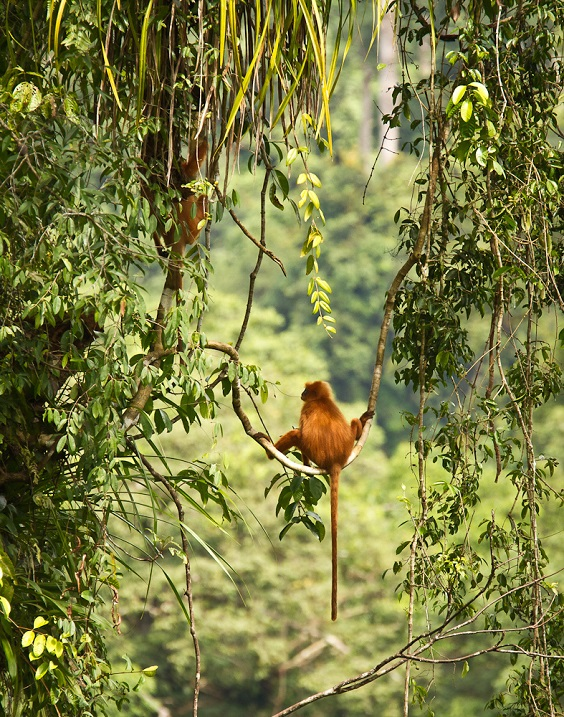 Тропический лес. остров Борнео. Малайзия. Фото