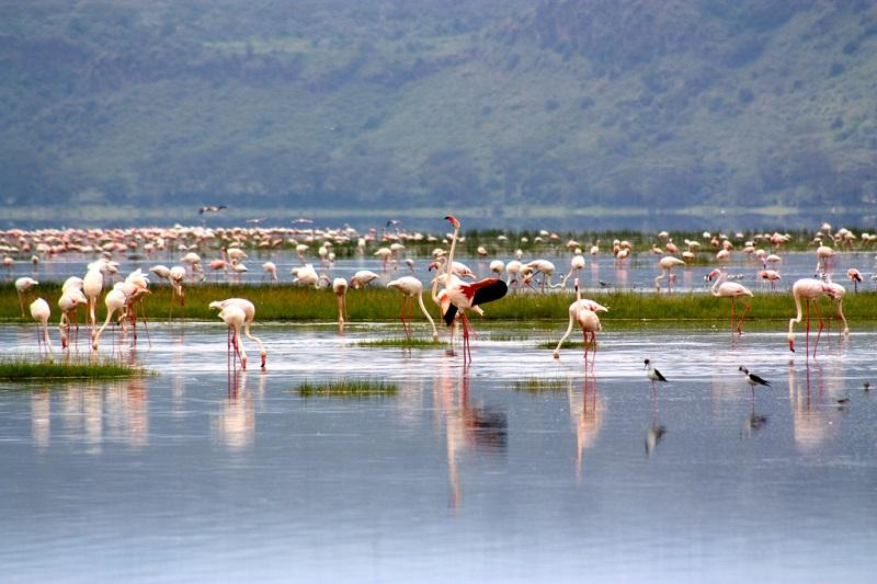 Национальный парк Озеро Накуру