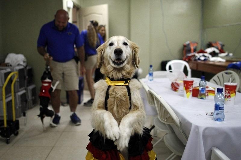 Танцующая собака Керри. Фото