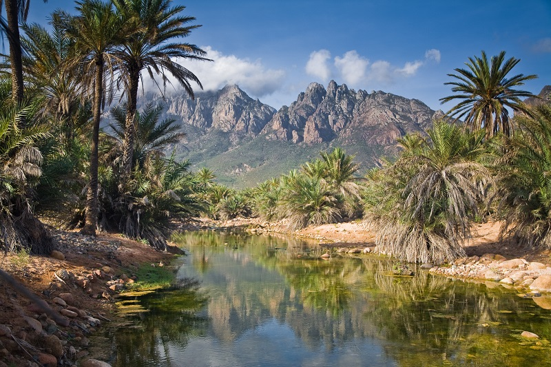 Удивительная природа острова Сокотра. Йемен. Фото