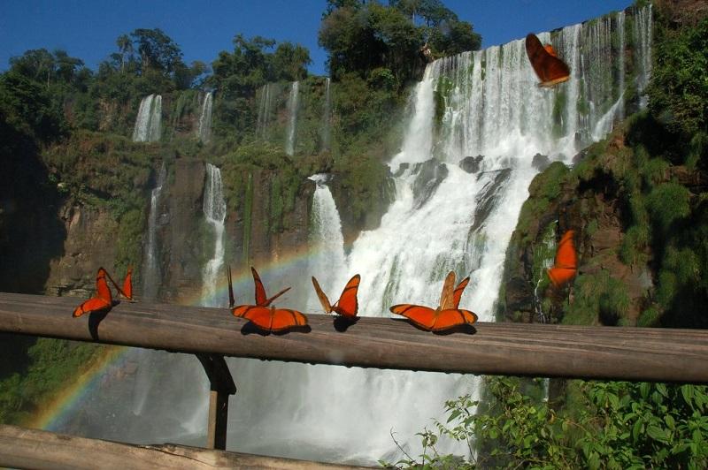 Бабчоки и радуга на фоне водопада Игуасу. Бразилия, Аргентина