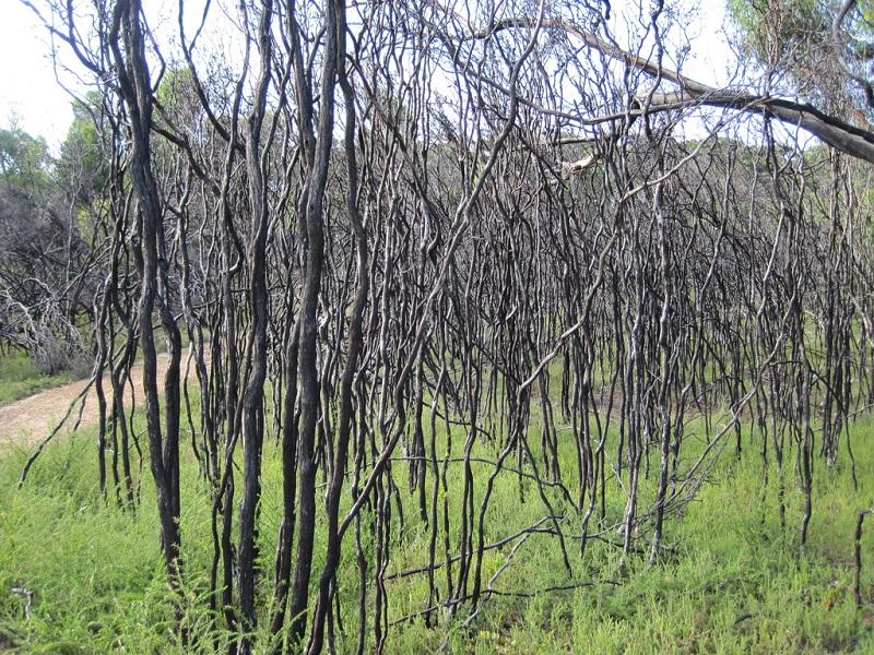 Национальный парк Флиндерс Чейз. Австралия. Фото